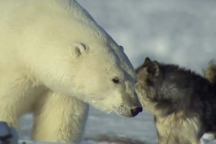 Polar Bear Town - Ep 5