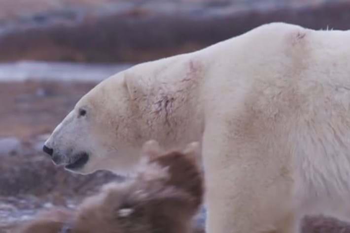Polar Bear Town - Ep 6
