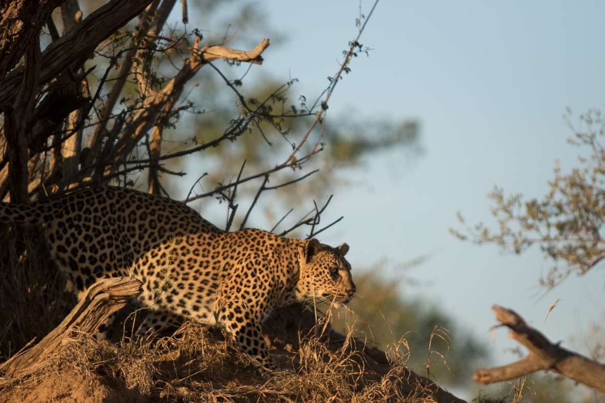 Leopard4 2016 01 04