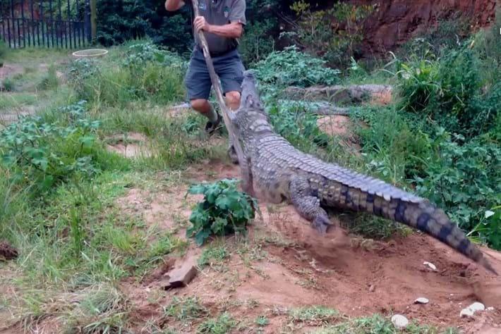 Crocodile Creek Attack
