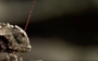 Meet the lizard that fends off enemies by shooting blood from its eyes