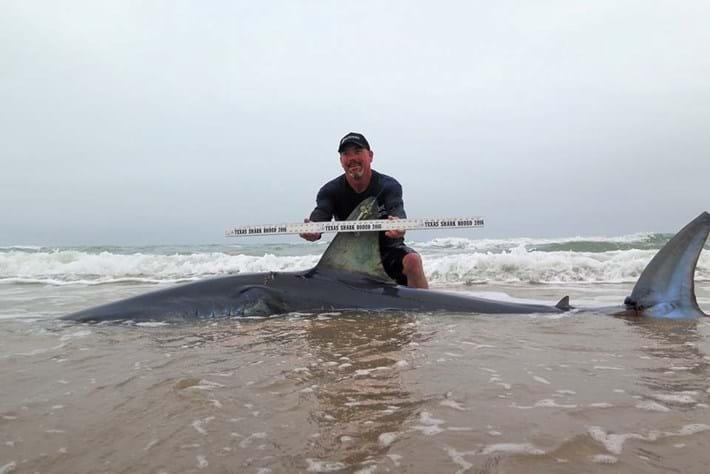 shark tag-3-2016-4-5