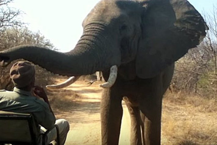 elephant inspection_thumb _2016_04_12