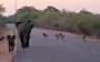 Watch: Elephant mom with calf in tow chases off wild dogs