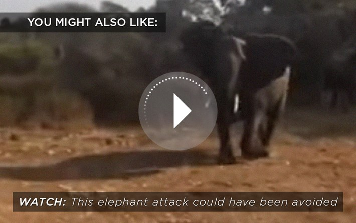 Elephant Attack Related 2016 04 13