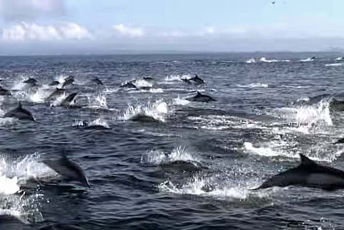 Dolphin -orca -ambush _2016_04_19