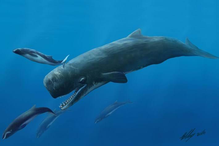 Beaumaris Killer Sperm Whale Hunting 2016 04 22
