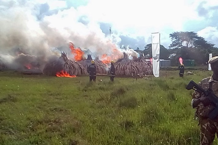 Ivory -burn -kenya _2016_05_06
