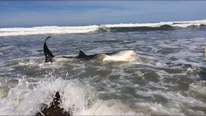 whaleshark-jon-6-2016-5-8