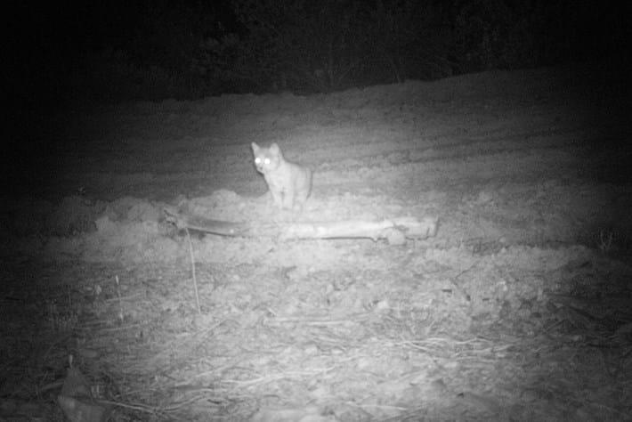 Baby Lynx _2016_05_27