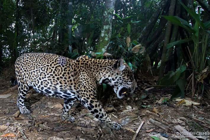 jaguar-5-2016-6-6