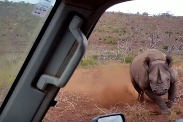 Rhino -charge -thumb _2016_06_22