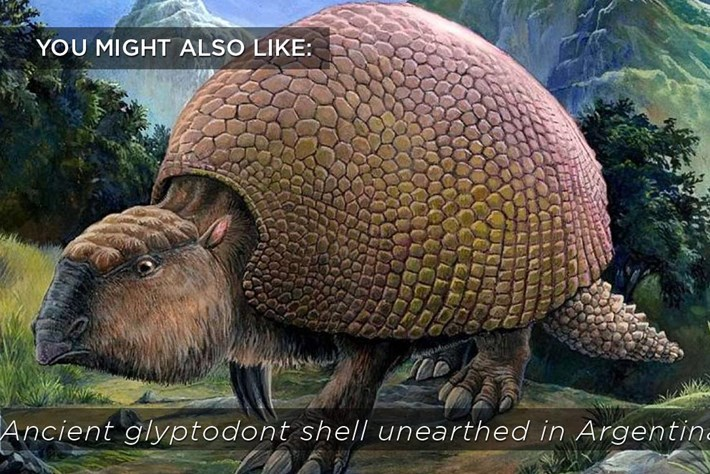 Glyptodont Shell Related Content 2016 07 30