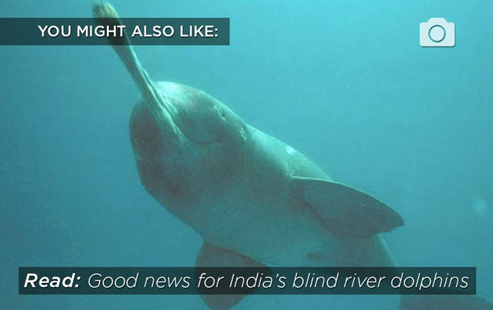 related-riverdolphin-2016-7-15