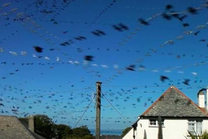 Birds sky 2016-07-18