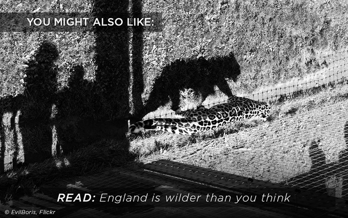 Related_Content_England_Wilder