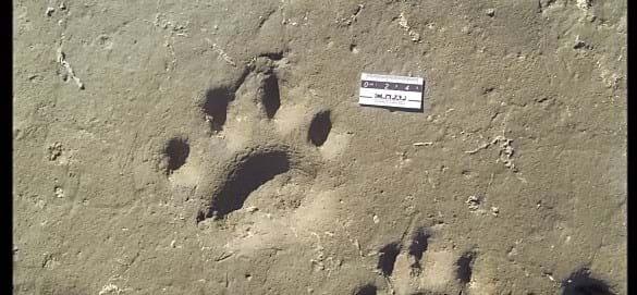 Sabertooth Footprint1 2016 07 25