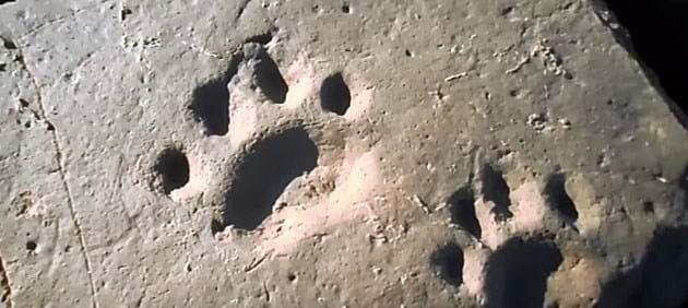 Sabertooth Footprint 2016 07 25