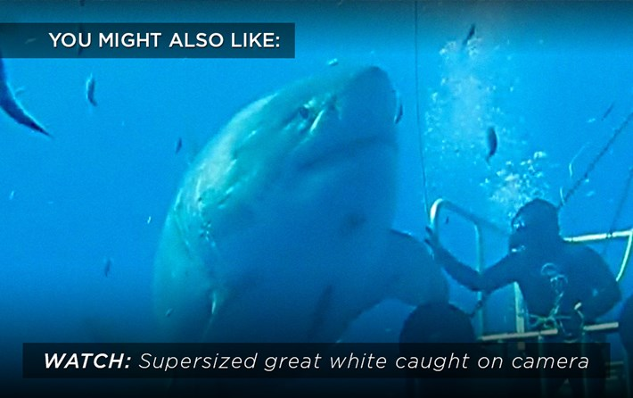 Supersized Great White Related 2107 07 28