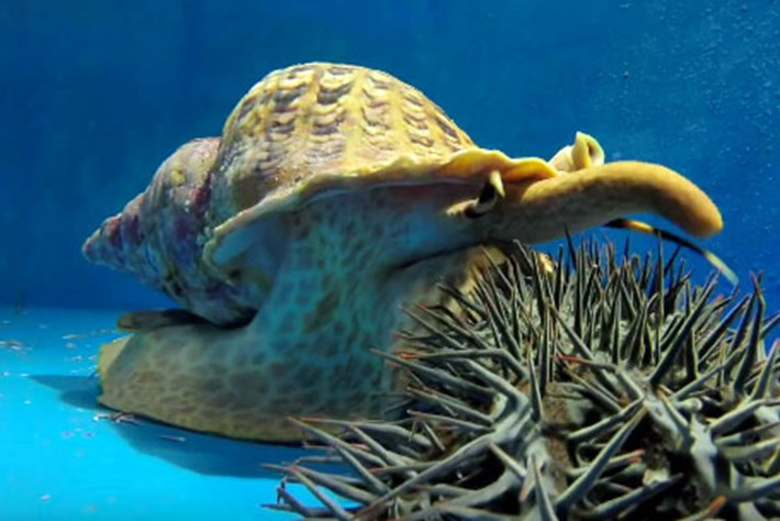 Snail -starfish -thumb _2016_07_29