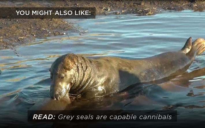 Grey Seals Related Content 2016 08 01