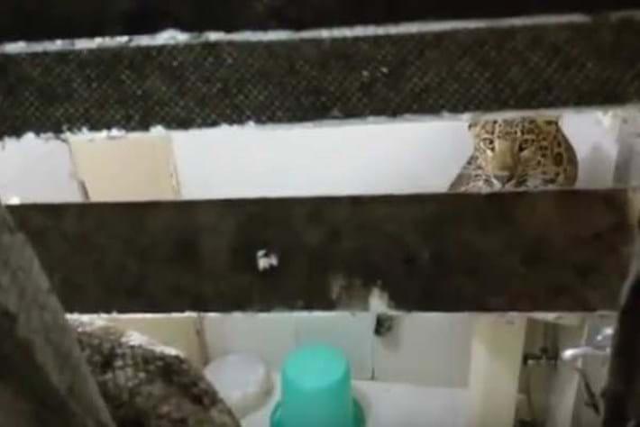Leopard India bathroom 2016-08-01