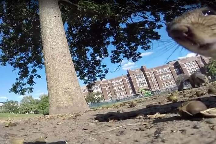 Squirrel GoPro 2016-08-11 (1)