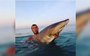 Fisherman slated for his 'waltz' with a sand tiger shark