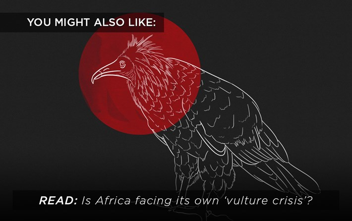 Vulture Crisis Related 2016 08 19