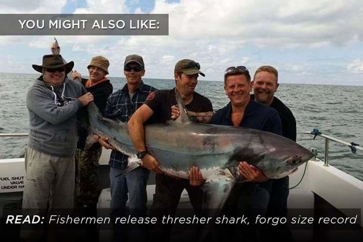 Thresher Shark Releaserelated Content 2016 08 29