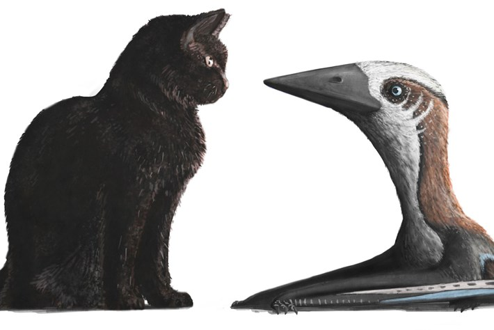 Cat Sized Pterosaur 2016 08 31
