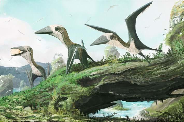 Pterosaur Pack 2016 08 31
