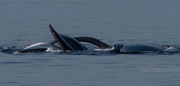 whalepenis-4-2016-8-31