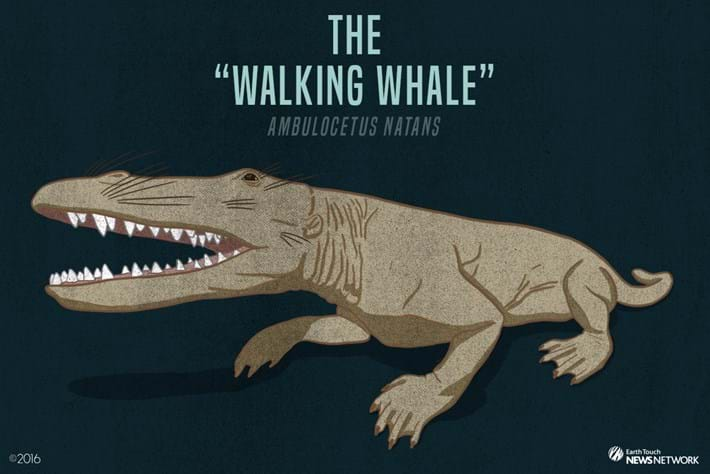 Walking Whale 2016 09 01