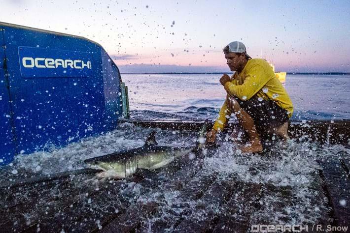 Montauk Shark 2016 09 05