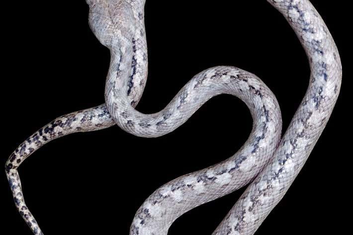 snake-snake-2016-9-12