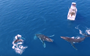 Trio of 'dancing' humpbacks wows fishermen in New Caledonia