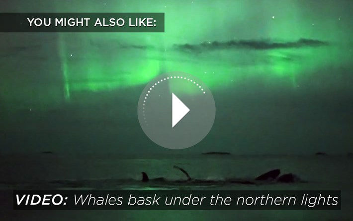humpback northern lights-related-2016-9-12