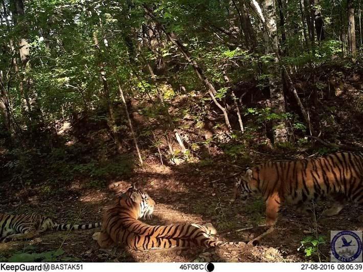 Zolushka Cubs 2016 09 13