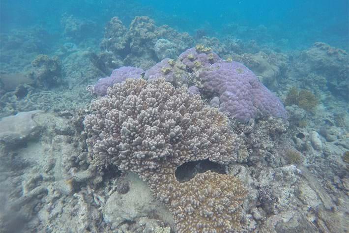 coral reef NASA_2016_09_19.jpeg