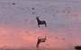 This joyfully prancing deer will make your day better