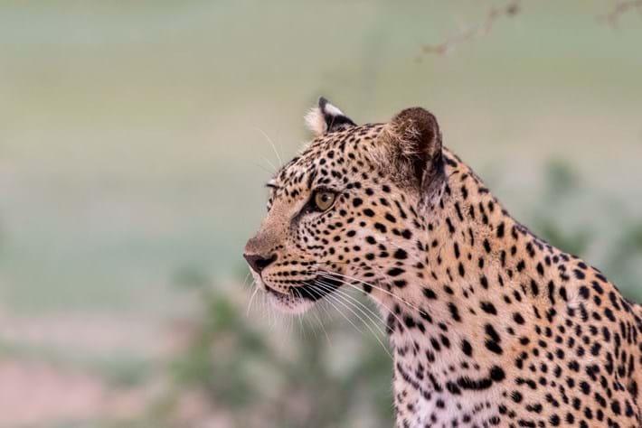 Itumeleng_leopard_11_2016-09-27.jpg