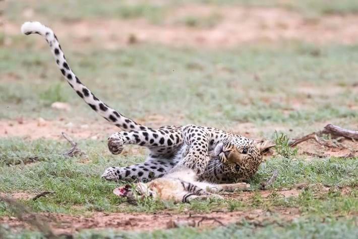 Itumeleng_leopard_12_2016-09-27.jpg