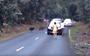 Watch: Tourists get a little too close to a cassowary roadblock