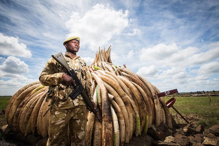 ivory stockpile_2016_10_04.jpg