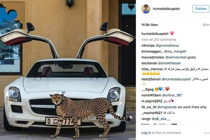 cheetah-luxury-pets_2016_10_04.jpg