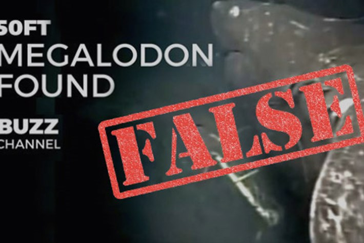 No, Megalodon was not just found in the Pacific