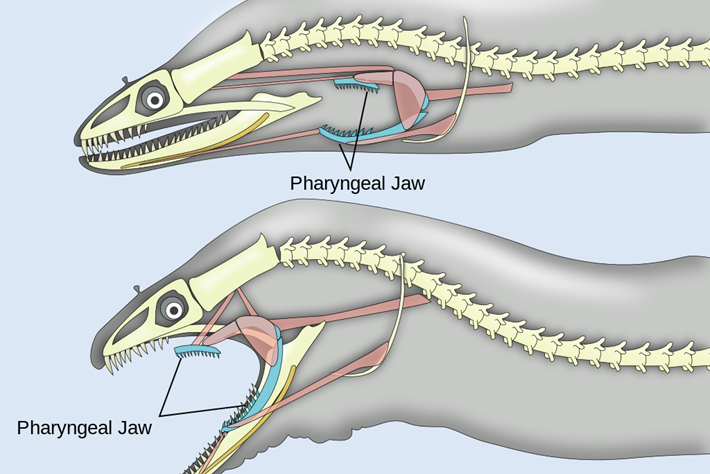 eels-jaws-2016-10-11.jpg
