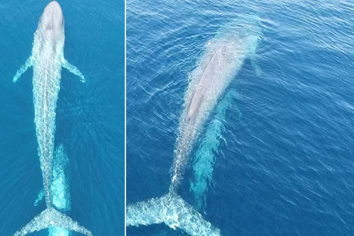 whales-comp-2016-10-12.jpg