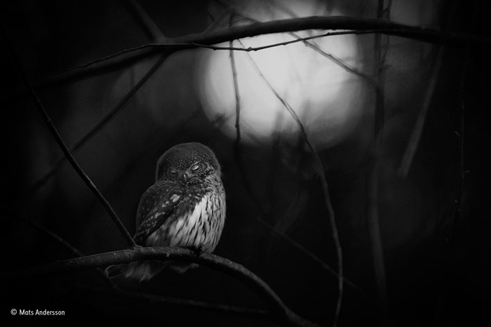 © Mats-Andersson_Wildlife Photographer of the year, Black and white winner_2016_10_18.jpg